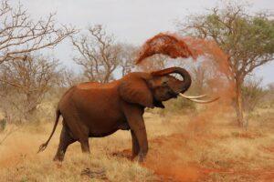 elephant-111695_1280-c1b4f7ef